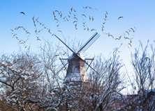 Windmill - PAM304