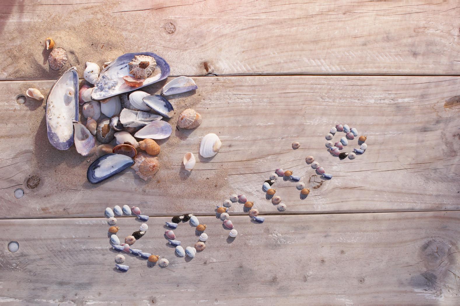 Sea Shells - PAM338