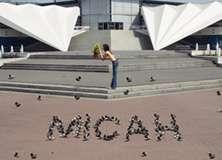 Pigeons - PAM112