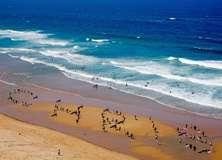 Beach - PAM320