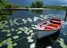 Boat - PAM322